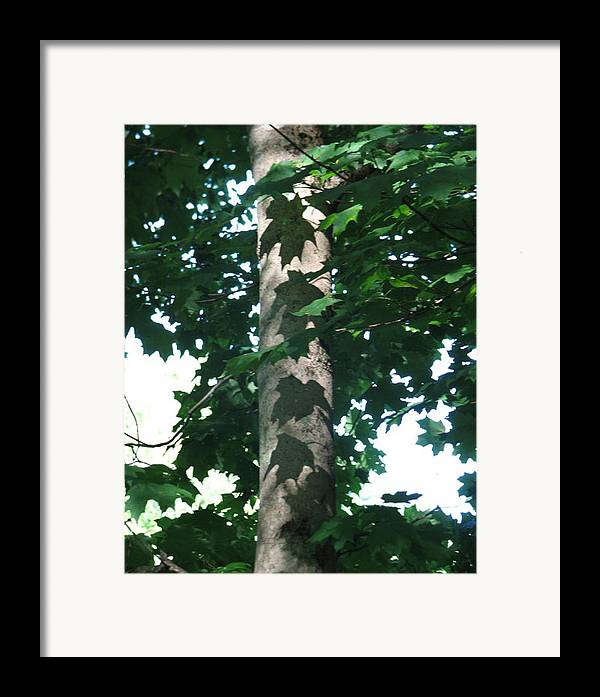 Tree Framed Print featuring the photograph Maple Leaf Shadows by Libby Cagle