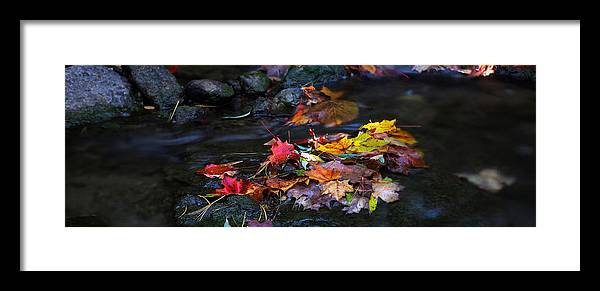 Landscape Framed Print featuring the photograph Maple Leaves-0001 by Sean Shaw