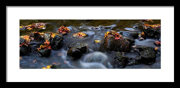 Landscape Framed Print featuring the photograph Maple Leaves-0003 by Sean Shaw