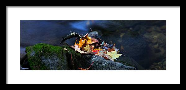 Landscape Framed Print featuring the photograph Maple Leaves-0004 by Sean Shaw