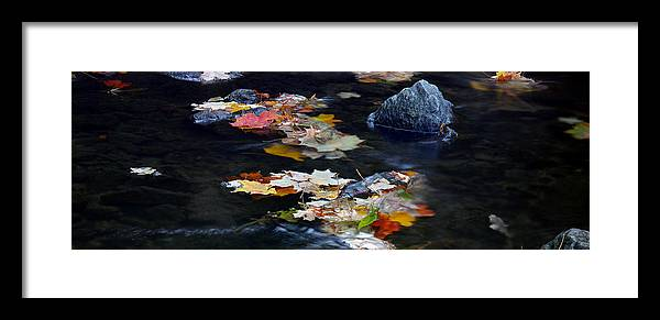 Landscape Framed Print featuring the photograph Maple Leaves-0005 by Sean Shaw