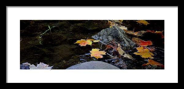 Landscape Framed Print featuring the photograph Maple Leaves-0006 by Sean Shaw