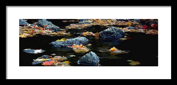 Landscape Framed Print featuring the photograph Maple Leaves-0008 by Sean Shaw