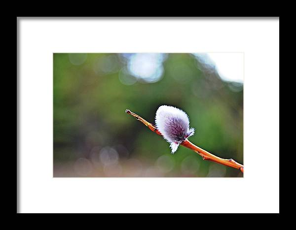 March Framed Print featuring the photograph March by HazelPhoto