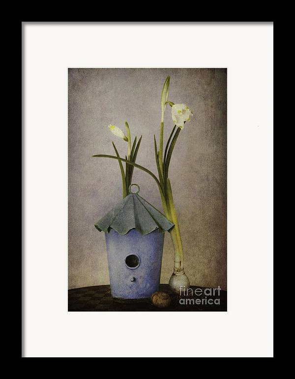 Still Life Framed Print featuring the photograph March by Priska Wettstein