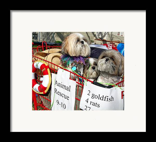 Mardi Gras Framed Print featuring the photograph Mardi Gras Pekingese Pups by Kathleen K Parker