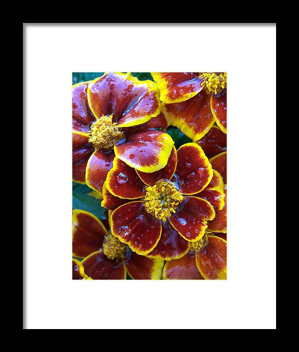 Flowers Framed Print featuring the photograph Mari 1 by Vijay Sharon Govender