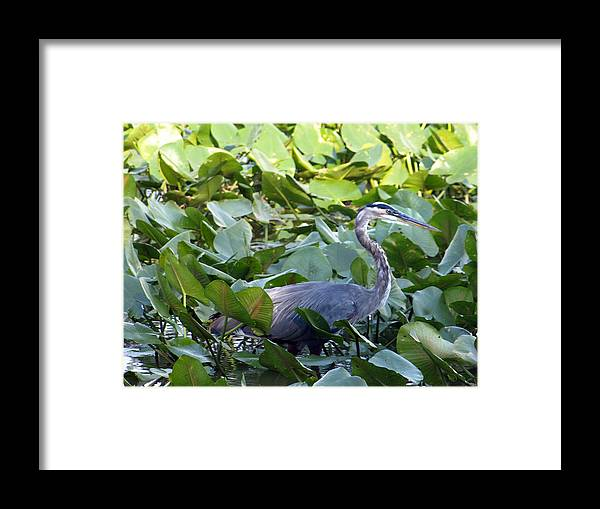 Blue Framed Print featuring the painting Marlboro Blue by KIm