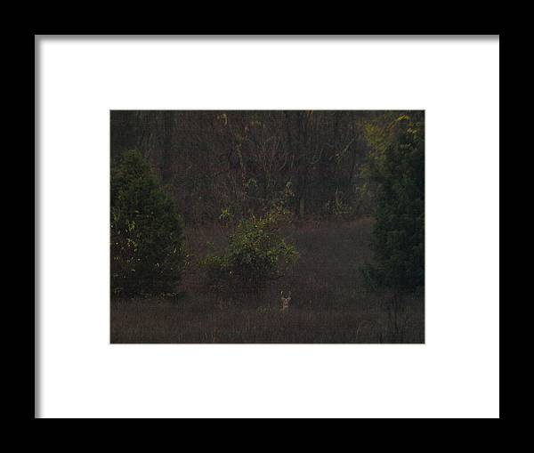 Fall Framed Print featuring the painting Marlboro Fall by Kim