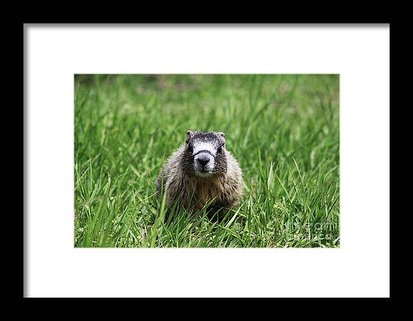 Pup Framed Print featuring the photograph Marmot Pup by Alyce Taylor