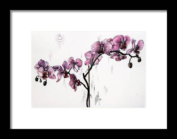 Realism Framed Print featuring the drawing Marning Orchids by Inga Vereshchagina