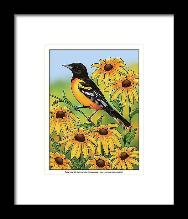 maryland state bird oriole and daisy flower framed print by crista