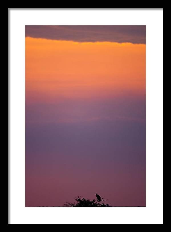 Masai Mara Framed Print featuring the photograph Masai Mara Vulture by Paco Feria