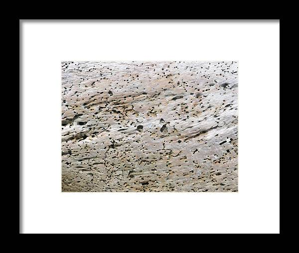 Driftwood Framed Print featuring the photograph Matecumbe by Jim Derks