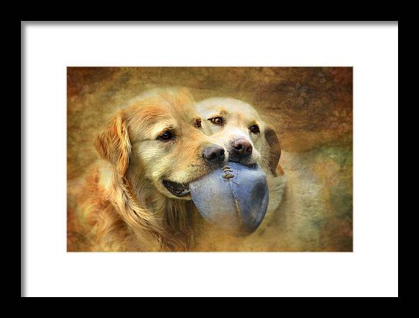 Dog Framed Print featuring the photograph Mates by Trudi Simmonds