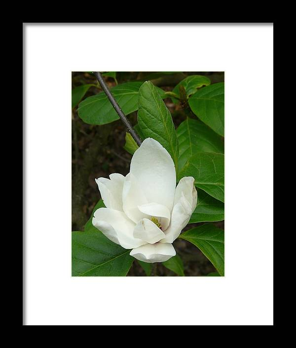 Spring Framed Print featuring the photograph May by Attila Balazs