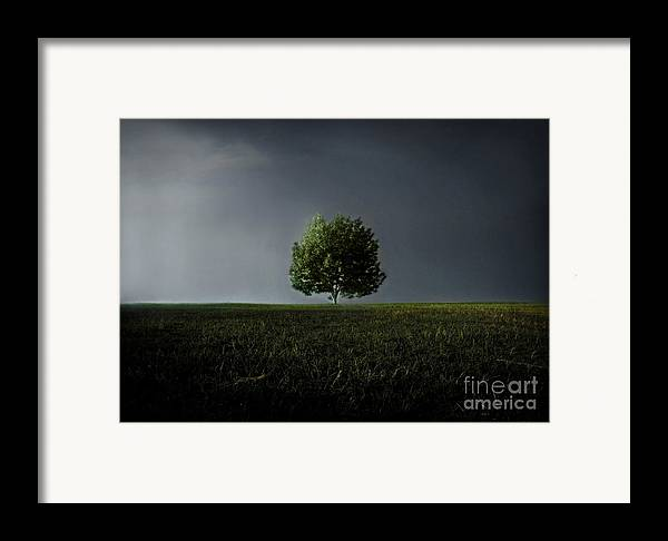 Blue Framed Print featuring the photograph Maybe This Year Will Be Better Than The Last by Dana DiPasquale