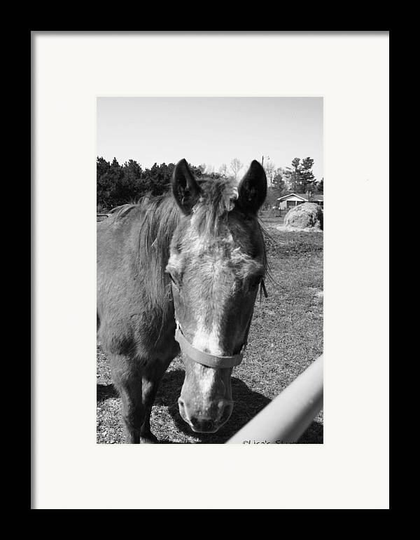 Horse Framed Print featuring the photograph Mcdonald 5 by Lisa Johnston
