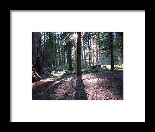 Mckinley Grove Framed Print featuring the photograph Mckinley Grove Shadows by Chris Gudger