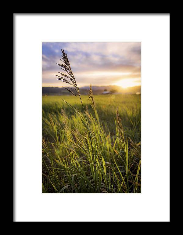 Meadow Light Framed Print featuring the photograph Meadow Light by Chad Dutson