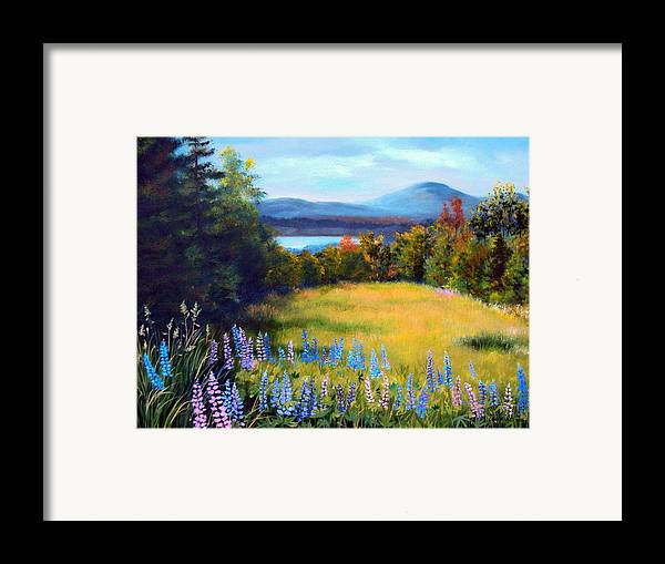 Spring Lupine Adorn The Edge Of This Hilltop Meadow Overlooking Mountains And Lakes Of Northern Maine. Framed Print featuring the painting Meadow Lupine II by Laura Tasheiko