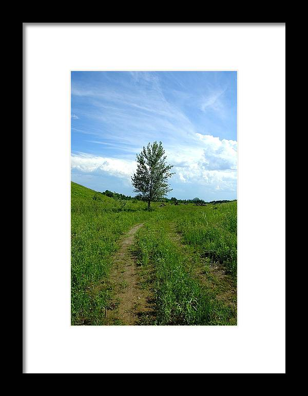 Nature Framed Print featuring the photograph Meadow Road by Mark Platt
