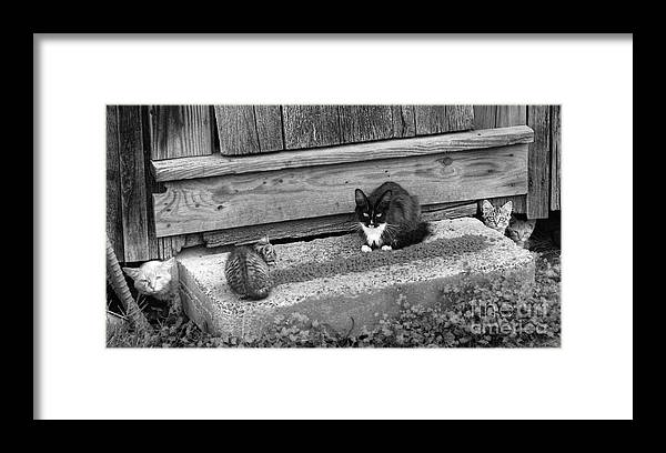 Cats Framed Print featuring the photograph Meal Time by Pete Hellmann