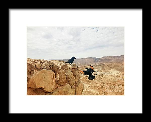 Israel Framed Print featuring the photograph Meeting In Judean Desert by Anna Serebryanik
