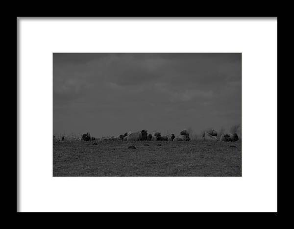 Bison Framed Print featuring the photograph Meeting On The Hill.. by Thomas Gorman