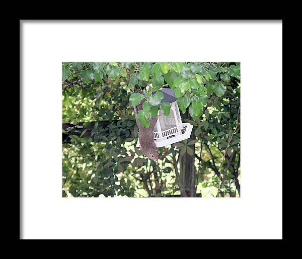 Nature Framed Print featuring the photograph Mercy Here She Comes by Linda Langston
