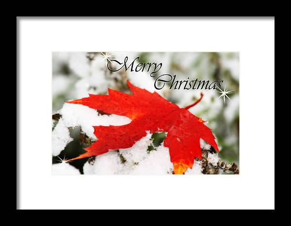 Christmas Card Framed Print featuring the photograph Merry Christmas Leaf by Cathy Beharriell