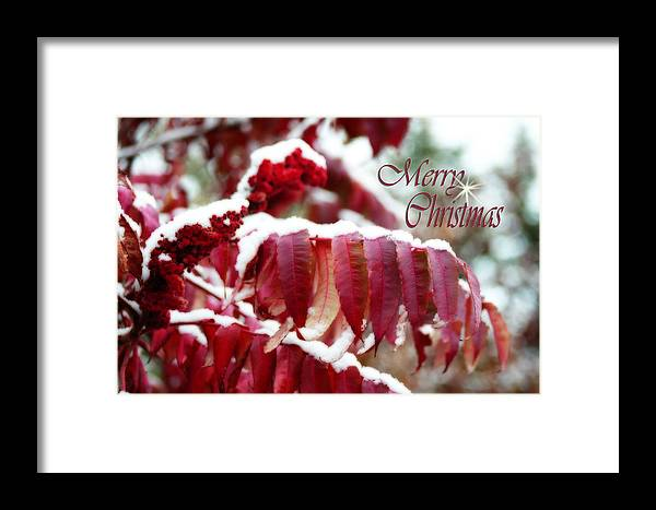 Christmas Card Framed Print featuring the photograph Merry Christmas Red Leaves by Cathy Beharriell