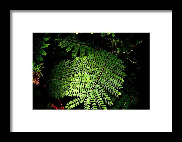 Fern Framed Print featuring the photograph Mexican Bird Of Paradise by Lessandra Grimley