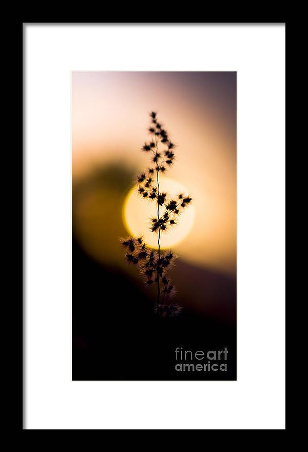 Shallow Dof Framed Print featuring the photograph Mexican Desert Sunset by Jorgo Photography - Wall Art Gallery