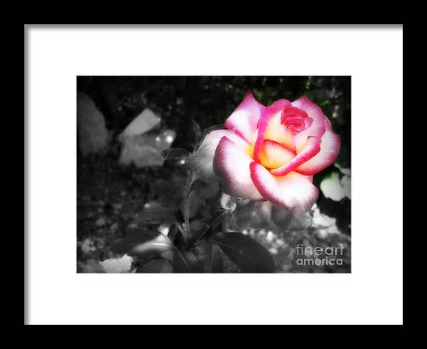 Black And White Framed Print featuring the photograph Mi Rosa by Linda De La Rosa