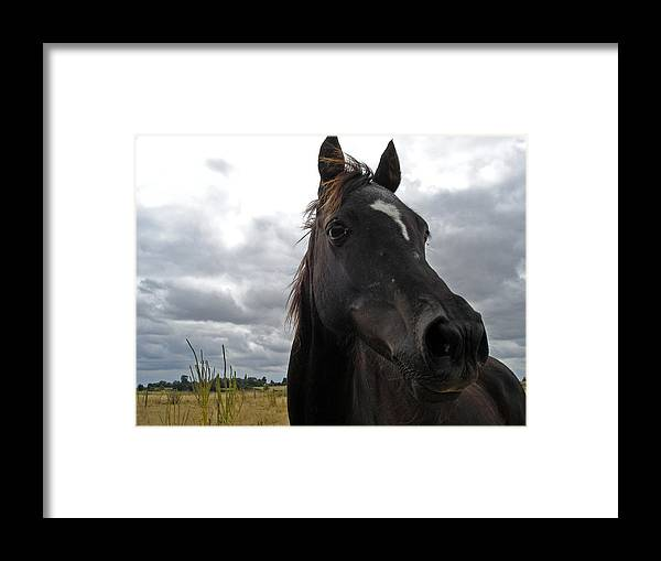 Black Beauty Framed Print featuring the photograph Midnight Melody by Susan Baker