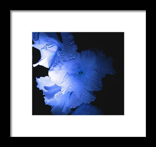 Flower Framed Print featuring the photograph Midnite Aroma Blue by Debbie May