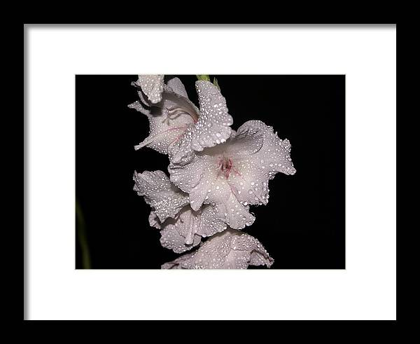 Pink Framed Print featuring the photograph Midnite Aroma by Debbie May