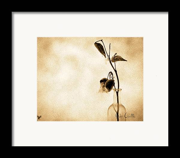Plant Framed Print featuring the photograph Milk Weed In A Bottle by Bob Orsillo