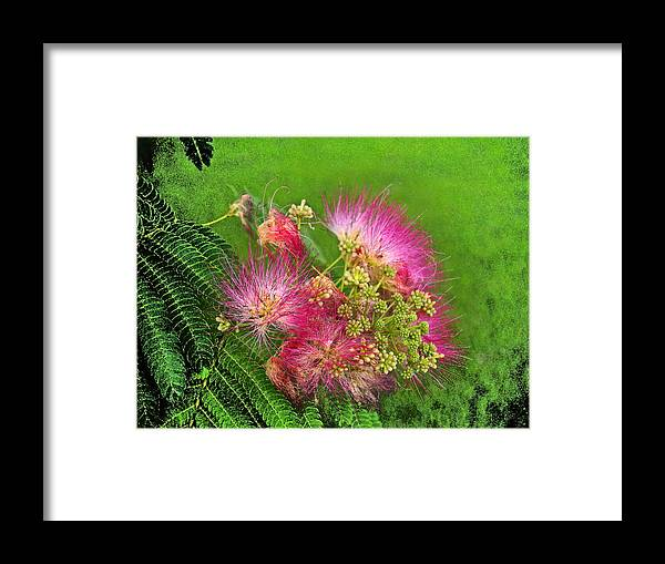Floral Framed Print featuring the photograph Mimosa II by James Granberry