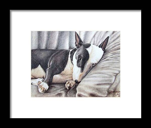 Dog Framed Print featuring the drawing Mini Bulldog Terrier by Nicole Zeug