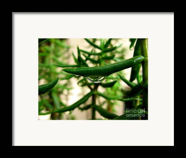 Clean Framed Print featuring the photograph Mini Forest by PJ Cloud