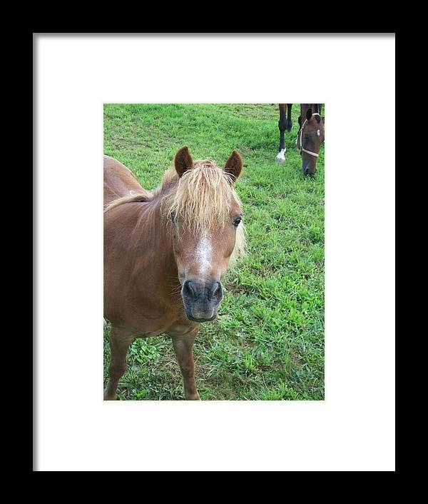 Miniture Framed Print featuring the painting Miniature Horse by Eric Schiabor