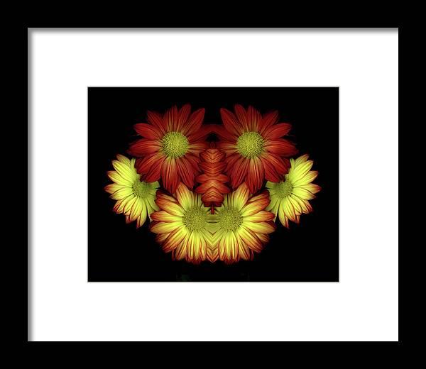 Mirror Image Framed Print featuring the photograph Mirror Mums by Vita Mancusi