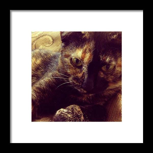 Kitten Framed Print featuring the photograph Mischief by Adam Lawrence