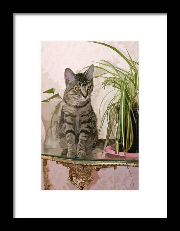 Framed Print featuring the digital art Miss Molly by Art Tilley