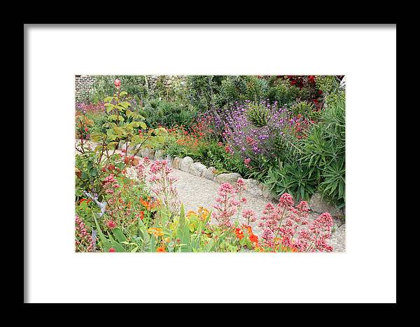 Garden Framed Print featuring the photograph Mission Garden by Carol Groenen