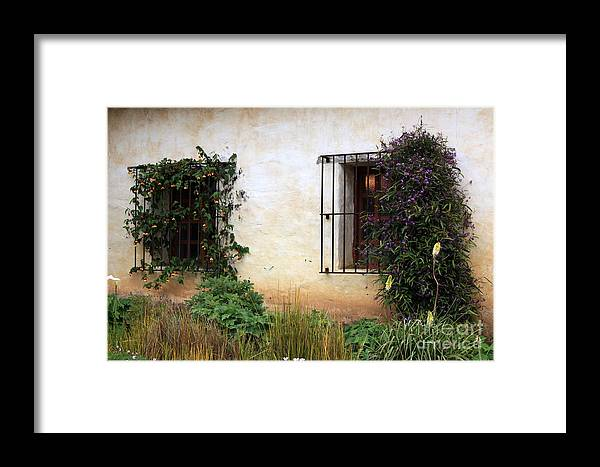 Vines Framed Print featuring the photograph Mission Windows by Carol Groenen