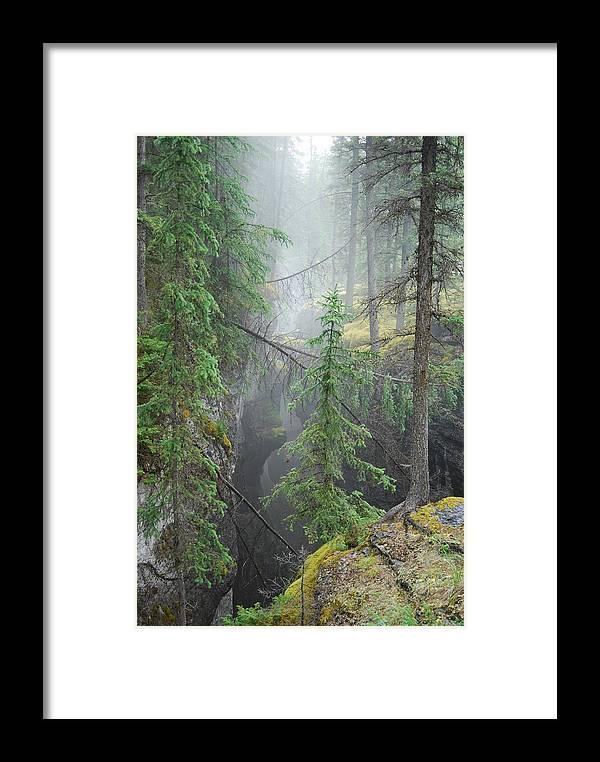 Landscape Framed Print featuring the photograph Mist Forest by Kim Blumenstein