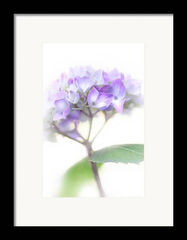 Hydrangea Framed Print featuring the photograph Misty Hydrangea Flower by Jennie Marie Schell